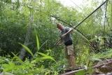 Bei der Bambusernte in Malaysien