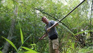 Malaiischer Lang Bambus