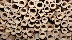 Tonkin Bambus